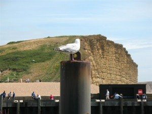 West Bay Dorset - The East Cliff
